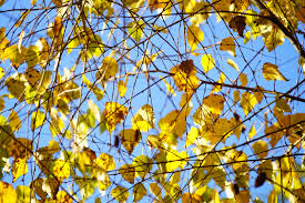 free images branch plant sky sunlight leaf autumn