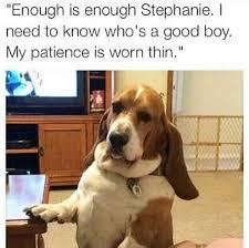 Dog Lover Meme - dog lover store on twitter who s a good boy dog doglover