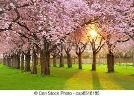 imagenes de archivo libres de derechos paisaje fascinante primavera césped ramas jardín imágenes