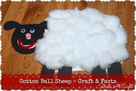 cotton ball sheep craft u0026 facts startsateight