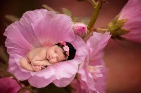 baby flowers megan hancock photography newborn and baby photos maternity