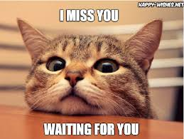 Miss You Meme - 20 cutest i miss you memes of all time sayingimages com