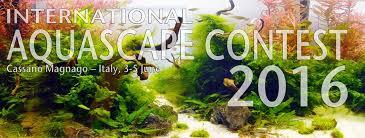 Aquascap International Aquascape Contest Home Facebook