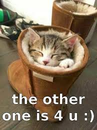 Sleeping Cat Meme - great cats be funny blog 26 of the funniest cat memes and gifs