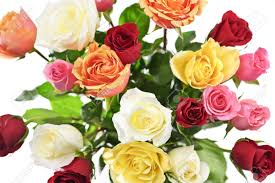 multicolored roses bouquet of assorted multicolored roses from above on white