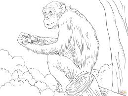 apes coloring pages free coloring pages