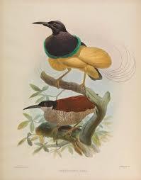 biodiversity heritage library visitors paradise