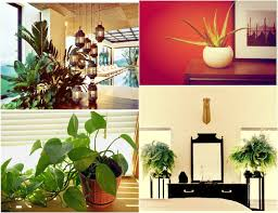 10 beautiful indoor house plants idea the complete woman