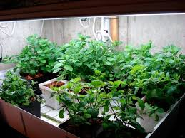 grow lights for indoor herb garden ebb flood sub irrigation hydroponic herbs under fluorescent grow