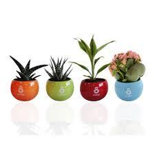 plante d駱olluante bureau plante publicitaire dépolluante en pot céramique plante