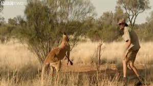 How Tall Is Jimmy Barnes Chris U0027brolga U0027 Barnes Needed Stitches On His Groin After Kangaroo