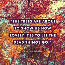 best 25 season quotes ideas on fall quotes