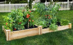 various plants diy backyard vegetable garden with wooden fence for