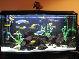 aquarium decoration ideas freshwater fish tank decoration ideas plus saltwater fish tank decorations plus