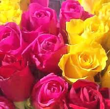 Flower Rose Rose Flower Varieties And Types Of Roses Theflowerexpert