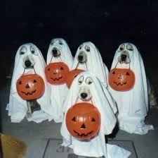the best dog treats and tricks for halloween rover com