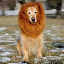 halloween lion costumes online get cheap pet lion costume aliexpress com alibaba group