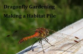 Dragonfly Garden Dragonfly Gardening Making A Habitat Pile Youtube