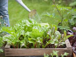 garden watering frequently asked questions hgtv