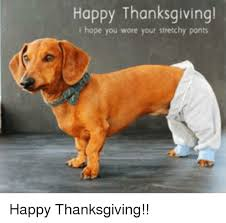 Stretchy Pants Meme - happy thanksgiving t hope you wore your stretchy pants happy