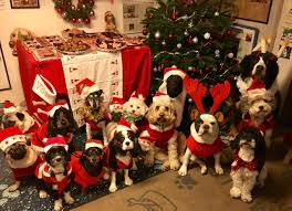 dog christmas these dogs had a christmas julbord and it was the cutest thing