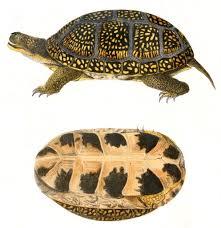list reptiles minnesota
