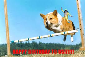 Corgi Birthday Meme - happy birthday corgi gif 2 gif images download