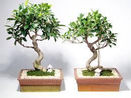 bonsai gardens guide hgtv