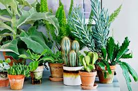 where to buy the best indoor plants on the sunshine coast