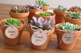 succelents diy teacher u0027s gift simple u0026 sweet mini succulents inhabitots