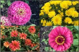 floral arrangements thanksgiving centerpieces garfield park