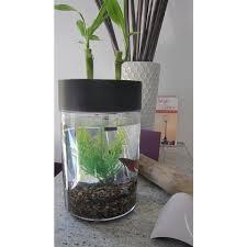indoor herb garden betta fish tank aquaponics aquaponics