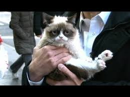 No Meme Grumpy Cat - grumpy cat interview 2013 on gma no meme feline s exclusive