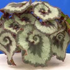 plant identification common houseplants memrise