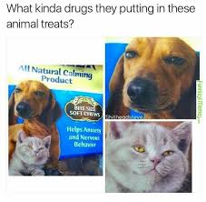 Dog Food Meme - visit www amazingdogtales com for the best funny dog joke pics