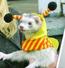 Ferret Costumes Halloween Buzzing Dress Ferret