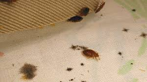 What To Use On Bed Bug Bites Bed Bug Bites Symptoms And Treatments