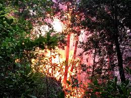 Wildfire Scientific Definition by Wildfires Are Causing Plants To Migrate North Popular Science