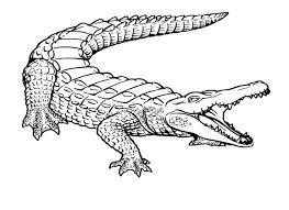 Coloriage Crocodile 11 dessin gratuit à imprimer