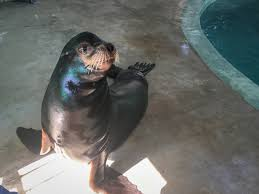 Columbus Zoo Lights Hours by 7 Sea Lions Are Coming To The Columbus Zoo Columbus Navigator
