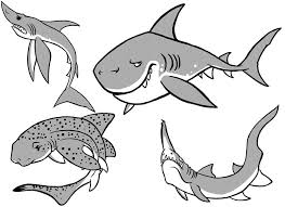 bull shark coloring pages u2014 fitfru style free printable shark