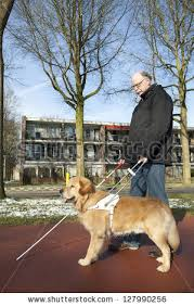 How Does A Guide Dog Help A Blind Person Guide Dog Stock Images Royalty Free Images U0026 Vectors Shutterstock