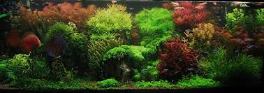Small Tank Aquascaping Aquascaping Techniques From Beginner To Advanced Home Aquaria