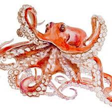 octopus picmia