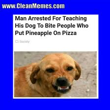 Clean Animal Memes - dog memes clean memes the best the most online