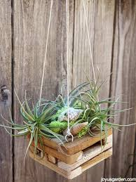hanging air plant another easy way to hang air plants