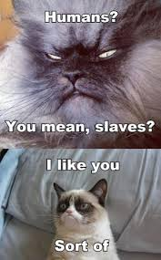 Frown Cat Meme - 49 youtube the 50 funniest grumpy cat memes complex
