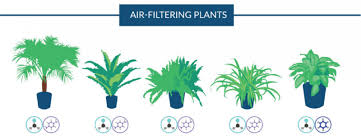 Best Plants For Air Quality by Nasa Guide To Air Filtering Houseplants Love The Garden