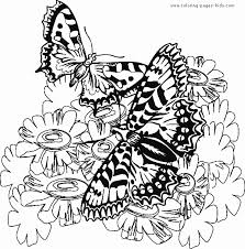 butterfy coloring sheet two butterflies
