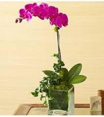 Orchid Plants Orchid Plants Rose Cart Sunnyvale Ca Florist